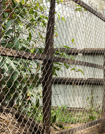 wire mesh: COLOR PHOTO OF CHAIN-LINK FENCE (ALSO REFERRED TO AS WIRE NETTING, WIRE-MESH FENCE, CHAIN-WIRE FENCE, CYCLONE FENCE, HURRICANE FENCE, OR DIAMOND-MESH FENCE)