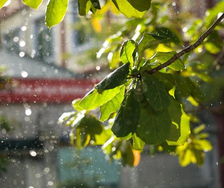 KLEURFOTO VAN CLOSE-UP VAN RAINDROPS EN BLURRY BLADEREN