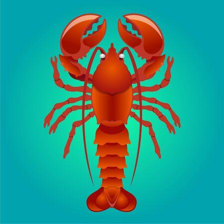 lobster: Vector lobster illustration Illustration