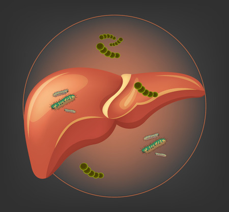 alimentary tract: Liver with germs and bacteria. Vector illustration