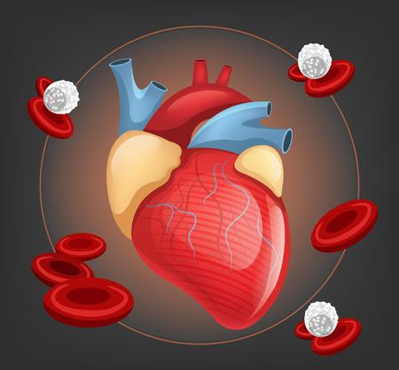 heart muscle cells: Vector human heart illustration Illustration