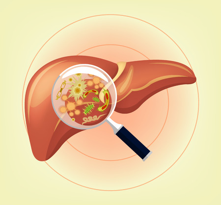 Liver with germs and bacteria and magnifier. Vector illustration