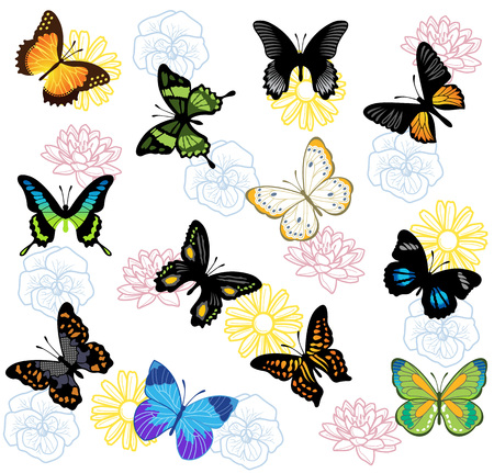 buterfly: Vector butterfly background Illustration