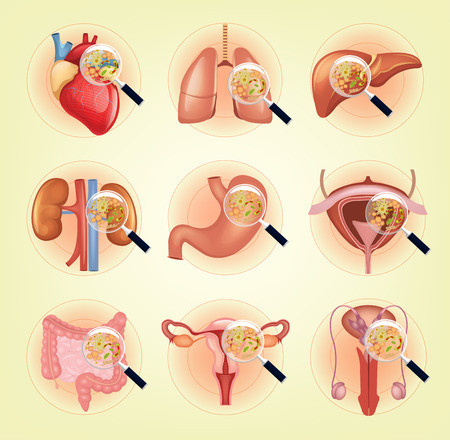 Vector ill internal organs set