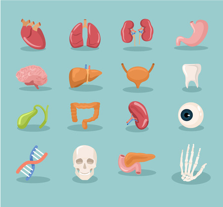 internal organs cartoon icon set