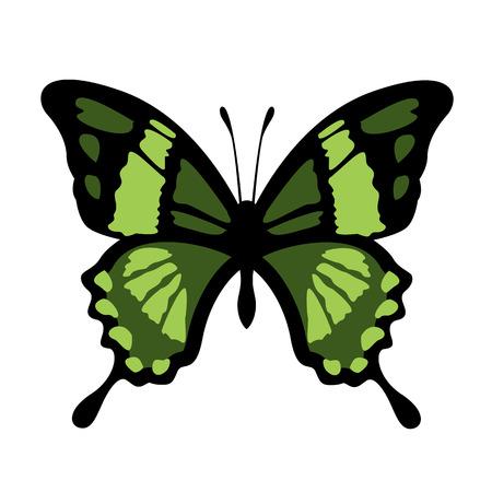 Vector Butterfly Illustration Illustration