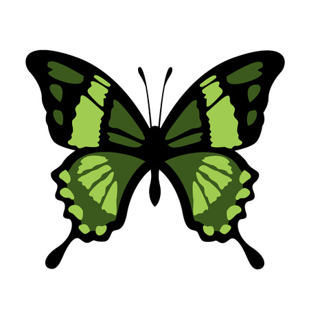 black butterfly: Vector Butterfly Illustration Illustration