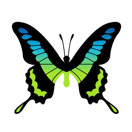 Vector Butterfly Illustration Vector