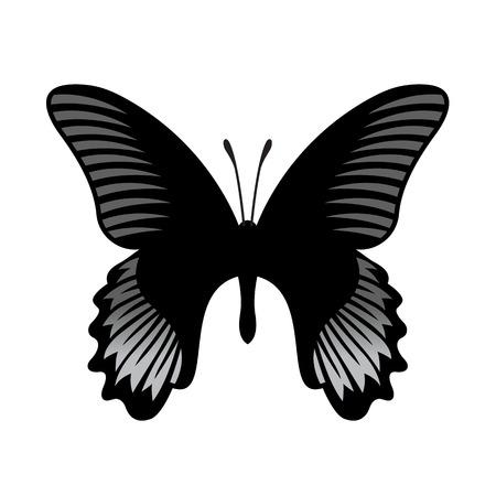 open wings: Vector Butterfly Illustration Illustration