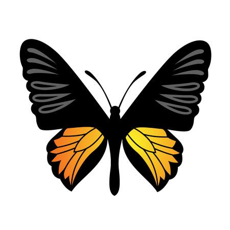 milkweed: Vector Butterfly Illustration Illustration
