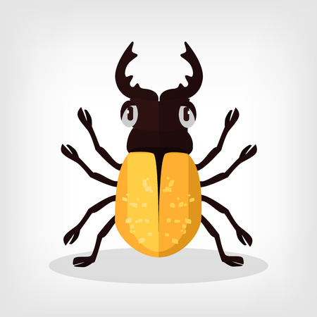 little insect: Vector beetle flat illustration Illustration