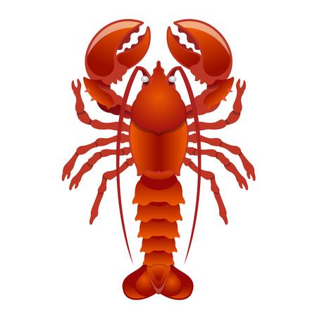 Vector lobster illustration Illustration