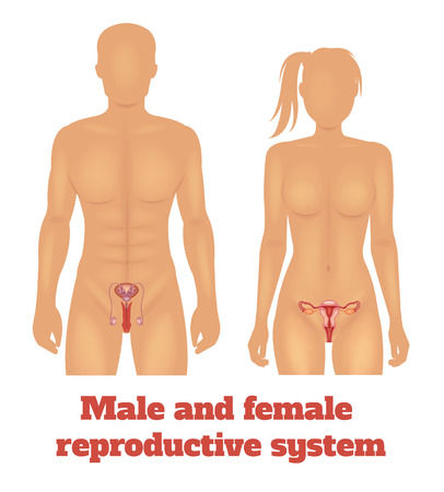 ovarian: Man and woman reproductive system. Vector illustration