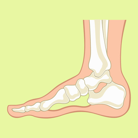 sideview: Foot x-ray. Vector flat illustration Illustration