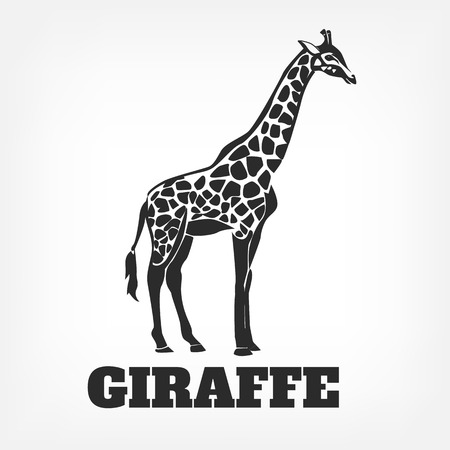 giraffe silhouette: Vector giraffe black illustration