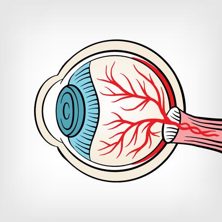 optic nerve: Eyeball x ray vector cartoon illustration