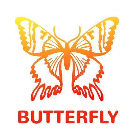 milkweed: Vector color butterfly icon illustration Illustration