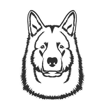 black wolf: Dog head vector black  icon illustration