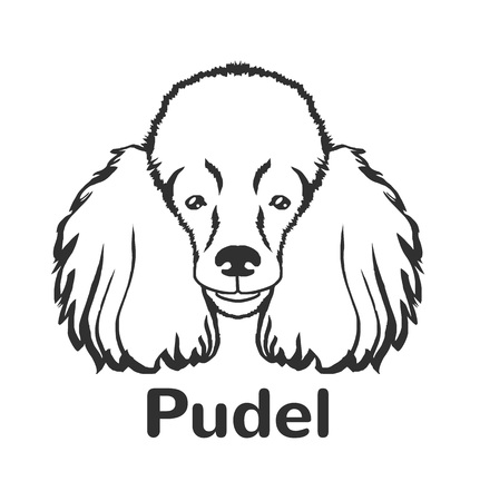 pet store advertising: Poodle vector black icon  illustration Illustration