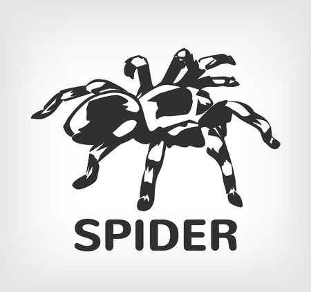 art vector: Spider vector black icon  illustration