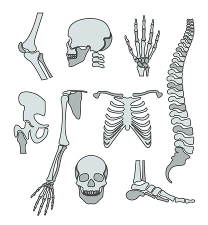 Human skeleton. Vector flat line illustration set