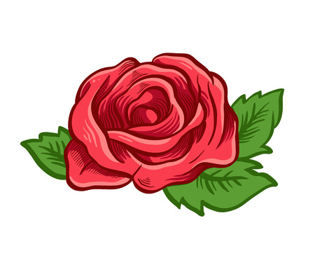 red rose: One red rose. Vector illustration