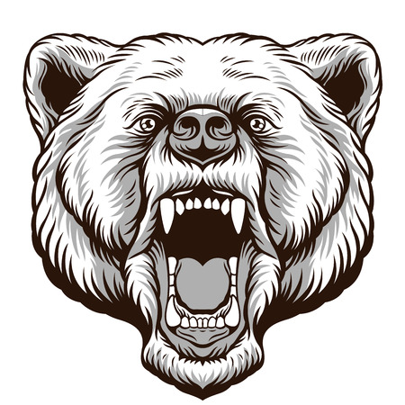 grizzly: Angry Bear Head. Vector illustration