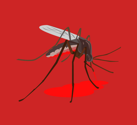 anopheles: Mosquito drink blood. Vector flat illustration Illustration
