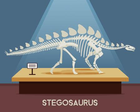 Stegosaurus bones skeleton in museum exhibition. Vector flat cartoon illustration