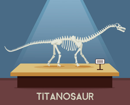 biggest animal: Titanosaur bones skeleton in museum exhibition. Vector flat cartoon illustration