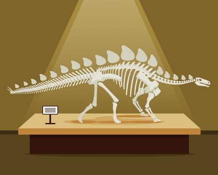 museum: Stegosaurus bones skeleton in museum exhibition. Vector flat cartoon illustration. School poster
