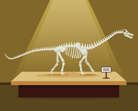 biggest animal: Titanosaur bones skeleton in museum exhibition. Vector flat cartoon illustration. Dinosaurs museum