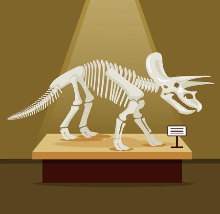 Triceratops bones skeleton in museum exhibition. Vector flat cartoon illustration. Dinosaurs museum