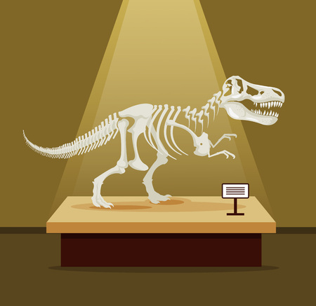 Tyrannosaur Rex bones skeleton in museum exhibition. Vector flat cartoon illustration. Dinosaurs museum