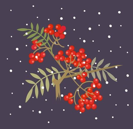 rowanberry: Branch of red rowanberry. Vector flat cartoon illustration