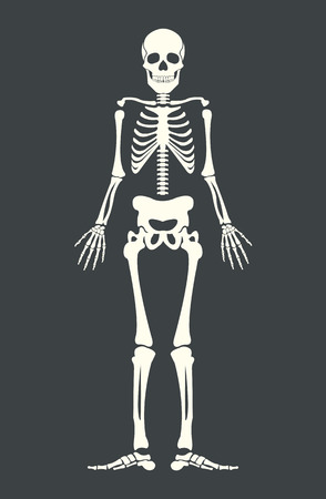 Scary skeleton. Vector flat cartoon illustration