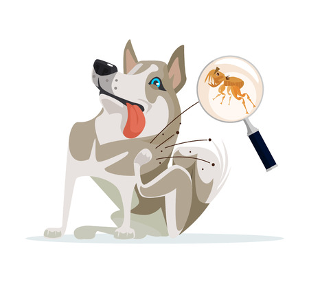 infestation: Dog character scratches fleas off. Vector flat cartoon illustration Illustration