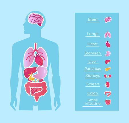 Anatomía humana. Concepto de educación en medicina. Ilustración de diseño gráfico aislado de dibujos animados plano de vector