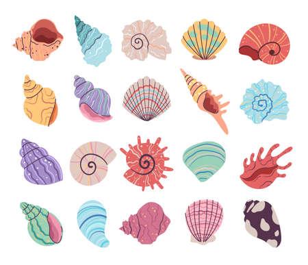 Tropical underwater seashell, clam, oyster shells. Hand drawn sea mollusk shellfish element. Vector flat graphic design illustration