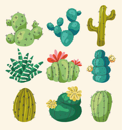 Set of different home cactus flowers isolated on white background. Vector flat graphic design illustration