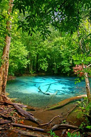 supposedly: Questa � la primavera di Emerald Pool. Questa primavera calda proviene da un flusso caldo nella foresta di pianura di Khao Nor Juji che si suppone sia la Thailandia Archivio Fotografico