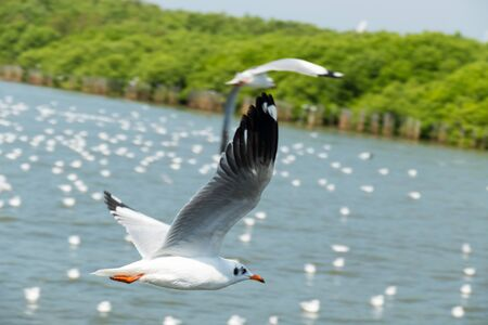 This is a picture of are seagulls in thailand