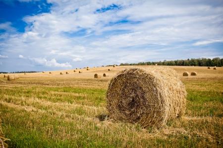 Straw Haystacks on the grain field after harvesting Archivio Fotografico