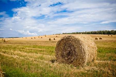 hayrick: Straw Haystacks on the grain field after harvesting Stock Photo