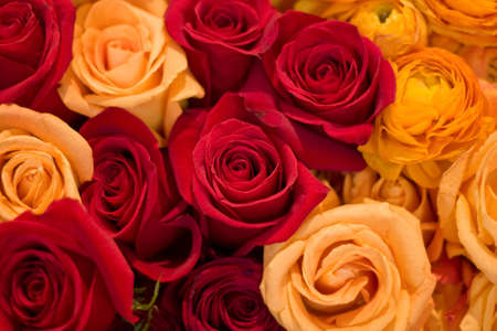 captivating: Arrangement of different colored roses