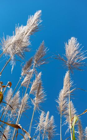 isolated spike flowers intense blue sky background