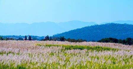 scenic landscape country church red flower carpet green grass mexico blue sky trees mountain artistic