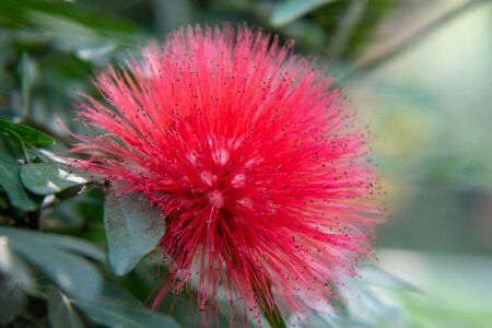red unique exotic flower green blur background