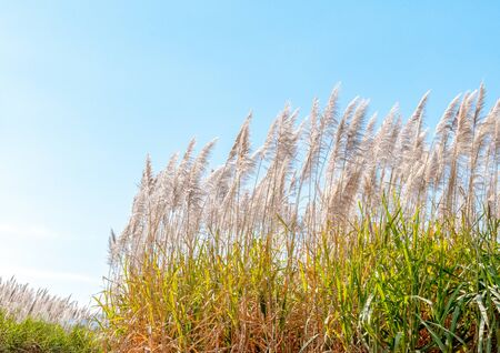 exotic beautiful spike flowers landscape blue sky background Stok Fotoğraf