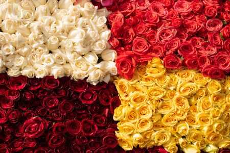 bunch of vibrant beautiful colorful roses White red salmon yellow carpet wallpaper many no people Фото со стока